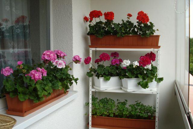 Какие цветы сажают в квартире 64