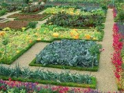 Огород на приусадебном участке